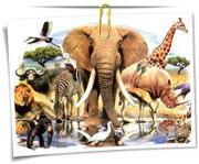 گالری عکس حیوانات