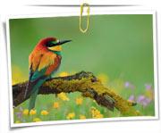 مجموعه عکس های پرندگان
