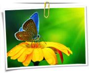 گالری عکس پروانه ها
