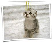 گالری عکس گربه سانان