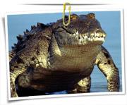 گالری عکس تمساح و کرکدیل
