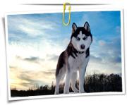 گالری عکس سگ ها