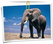 گالری عکس فیل ها