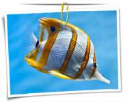 گالری عکس ماهی ها