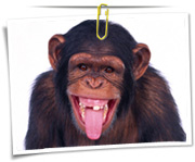 گالری عکس میمون و شامپانزه