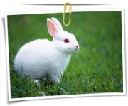 گالری عکس خرگوش