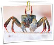 گالری عکس موجودات دریایی
