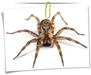 گالری عکس عنکبوت و رتیل