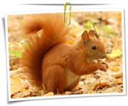 گالری عکس سنجاب ها