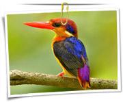 گالری عکس پرنده ها