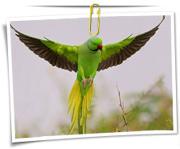 مجموعه عکس های پرنده طوطی