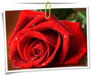 عکس گلها