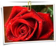 گالری عکس گلها