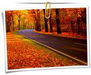 گالری عکس طبیعت پاییز برگ ریزان