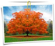 گالری عکس درخت و جنگل
