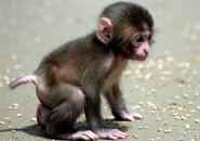 عکس های میمون و شامپانزه