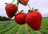 عکس متنوع از میوه ها