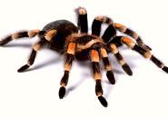 عکس عنکبوت و رطیل ها