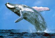 عکس های نهنگ و وال