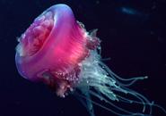 عکس های عروس دریایی
