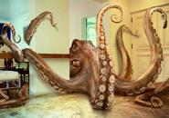 ماهی های مرکب و اختاپوس